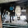 Twelve Irish-trained greyhounds discovered in cages with no food or water at Dublin Port