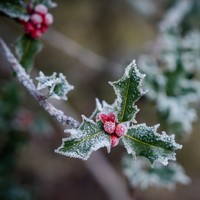 This weekend will be foggy, frosty and absolutely freezing