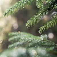 Christmas weather: cold week forecast as rain to dampen festive season