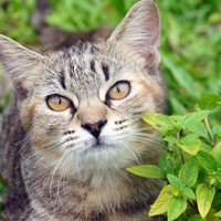 Security guard charged over spate of attacks on cats in Brighton