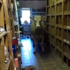 VIDEO: Cow takes a wander around Ennis hardware store