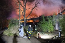Scores of animals killed in fire at German zoo
