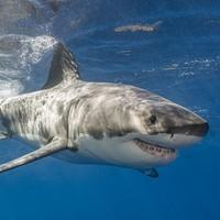 Man killed in shark attack at popular diving spot in Australia