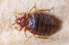 Police in the US searching for person who tried to release bedbugs in Walmart store