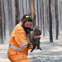 As wildfires continue to rage, hundreds of millions of Australian wild animals feared dead
