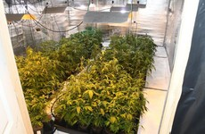 Hundreds of cannabis plants worth €400,000 seized in Donegal