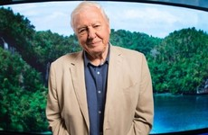 'Humans have overrun the world': David Attenborough issues stark warning ahead of new documentary