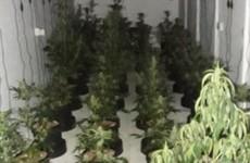 Gardaí seize €100k of cannabis in Monaghan raid