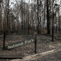 Wildfires may permanently alter Australian landscape, scientists warn