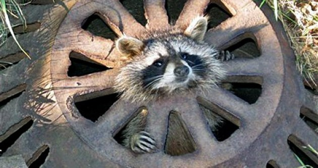 'Help I'm Stuck' Pic of the Day