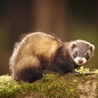 Exposure to rabies-like virus found in animal in Cork