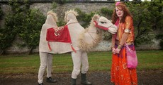 Brollies, pirates... and a camel: the Body and Soul festival in pics