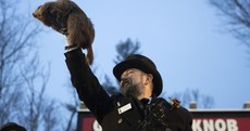 Groundhog Day: Early spring a certainty, says Punxsutawney Phil