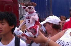 This ridiculous dog tells you everything you need to know about the Miami Heat victory parade