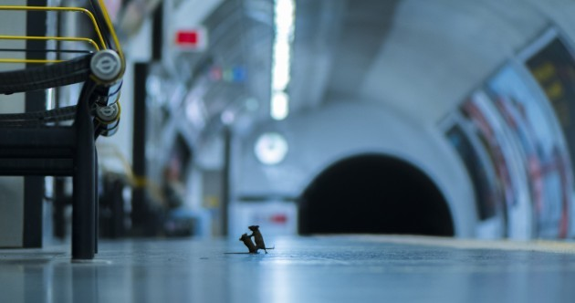 Photo of two mice 'squabbling' on London Tube platform wins top wildlife photography award