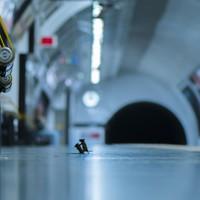 Photo of two mice 'squabbling' on London Tube platform wins top wildlife photography award