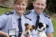 Gardaí awarded medals for work in combating cruelty to animals