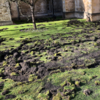 Extinction Rebellion digs up Cambridge college lawn in environmental protest