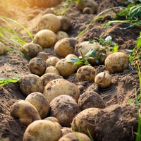 A new potato campaign aims to change the perception millennials have of the humble spud