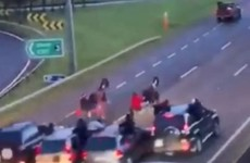 ISPCA 'shocked and appalled' after video emerges of high-speed sulky race on N7
