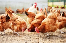British minister refuses to rule out chlorinated chicken in trade deal with North America