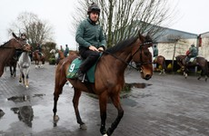 Willie Mullins adds another challenger to Champion Hurdle field at a cost of £22k