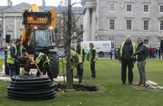 After two years of planning, Trinity College replaces iconic 150-year-old trees