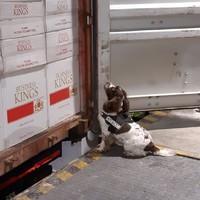 Over 10 million cigarettes worth €6 million seized at Dublin Port