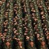 UN experts to investigate North Korea's Mercs
