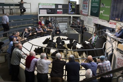 Stock image of farmers at a livestock mart.