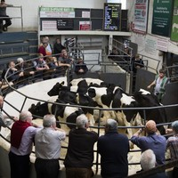 'It's like the stock exchange closing': Farmers at a loss to sell their cattle as marts close for several weeks