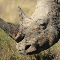 Limerick man wanted for alleged rhino horn trafficking willing to surrender himself to US authorities, court told