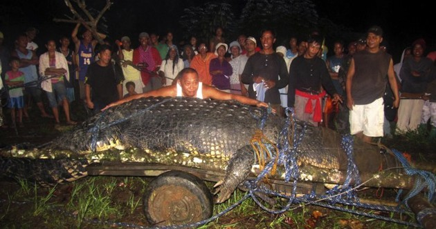 Photos: Meet the largest saltwater crocodile in the world*