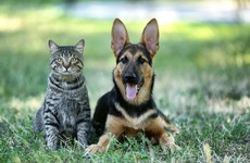 No indication that household pets are active transmitters of Covid-19, veterinary council says