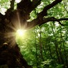 Your evening longread: Why old trees are crucial to fighting climate change