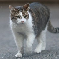 Two pet cats in New York test positive for coronavirus