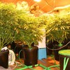 Five people arrested and cannabis worth €94,000 seized by gardaí