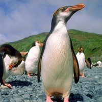 It's World Penguin Day today (it's a thing) and it turns out they're actually helping scientists to map the Antarctic