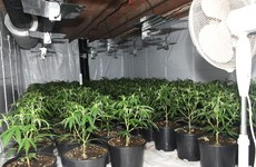 Gardaí find €400k worth of cannabis herb at Mayo growhouse