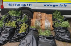Man arrested after gardaí seize cannabis worth €165,000 in Wexford