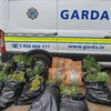 Man arrested after gardaí seize cannabis worth €165,000 in Wexford