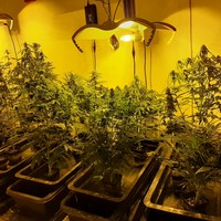 Gardaí discover concealed door leading to cannabis grow houses in Tipperary apartment