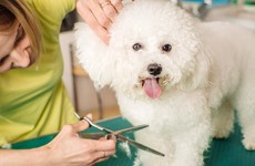 ISPCA says dog groomers can provide services for pets who need 'urgent' care