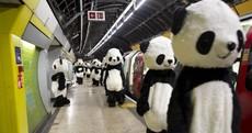 Panda Awareness Week Pic of the Day