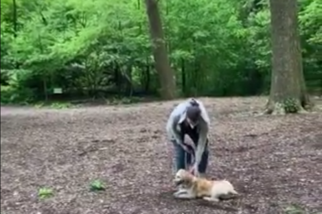Amy Cooper was filmed by the man who said he had asked the woman to leash her dog