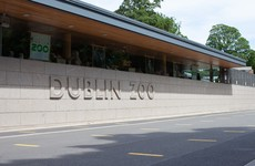 Dublin Zoo to reopen to public tomorrow with reduced capacity and new health protocols