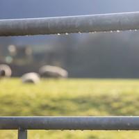Man (70s) dies in Cork farm accident