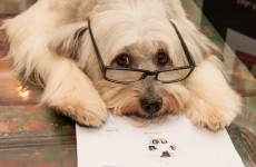 Pudsey says 'woof!' to a book deal