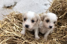 Appeal after 14 dogs stolen from house during burglary