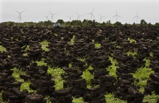 Bord Na Mona to end peat harvesting, with €5 million going towards bog rehabilitation